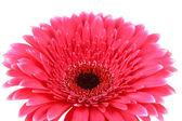 美しいピンクのガーベラの花白で隔離されます。 — ストック写真