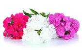 白で隔離されるフロックスの美しい花束 — ストック写真