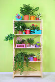 Beautiful flowers in pots on wooden shelves in room — Stock Photo