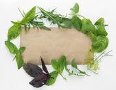 Vecchia carta marrone con erbe fresche, isolato su bianco — Foto Stock