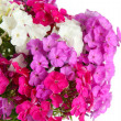 Beautiful bouquet of phlox isolated on white — Stock Photo