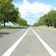 Asphalt road — Stockfoto #29096741
