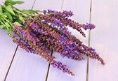 Salvia bloemen op paarse houten achtergrond — Stockfoto