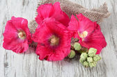 Pink mallow flowers on wooden background — Stock Photo