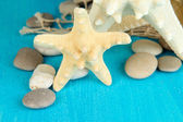 White starfishes on blue wooden table close-up — Stock Photo