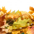 Stock Photo: Dry autumn maple leaves isolated on white