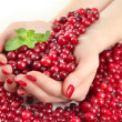 Woman hands holding ripe red cranberries, isolated on whit — Stock Photo #29129423