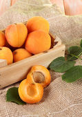 Apricots in drawer on bagging on wooden table — Stock Photo