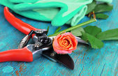 Garden secateurs and rose on wooden table close-up — Stock Photo