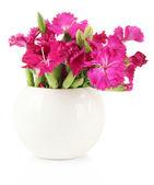 букет из гвоздики в вазе, изолированные на белом — Стоковое фото