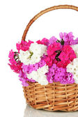 Beautiful bouquet of phlox in wicker basket isolated on white — Stock Photo