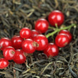 Berry dry tea close up — Stock Photo