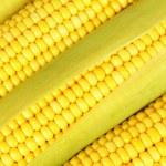 Crude corns — Stock Photo #29306051