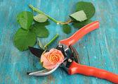 Trädgård sekatörer och rose på träbord närbild — Stockfoto