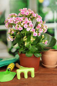 Beautiful flower in pot on wooden table on window background — Stock Photo