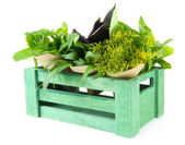 Fresh herbs in wooden crate, isolated on white — Stock Photo