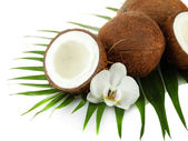 Coconuts with leaves and flower, isolated on white — Stock Photo