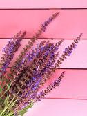 サルビアの花ピンクの木製の背景 — ストック写真