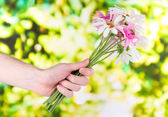 Man's hand giving a chamomiles on bright background — Stockfoto