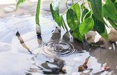 Grünes blatt mit spiegelbild im wasser — Stockfoto