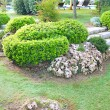 Landscaping in the garden — Photo
