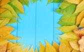 Heldere herfstbladeren op blauwe houten plank achtergrond — Stockfoto