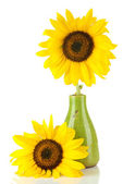Bright sunflowers in vase isolated on white — Stock Photo