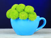 Beautiful green chrysanthemum in cup on table on dark blue background — Stock Photo