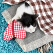 Sleeping kitten on blue carpet — Stock Photo