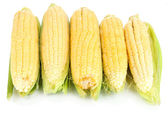 Verse maïs plantaardige geïsoleerd op wit — Stockfoto