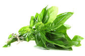 Fresh basil, isolated on white — Photo