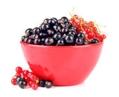 Red and black currant in bowl isolated on white — Stock Photo