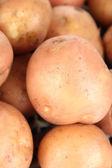Potato close-up — Stock Photo