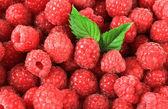Ripe sweet raspberries, close up — Stock Photo