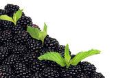 Zoete blackberry geïsoleerd op wit — Stockfoto