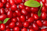 Fresh cornel berries, close up — Foto Stock
