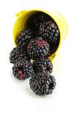спелые ягоды ежевики в ведро, изолированные на белом — Стоковое фото