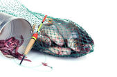 Fishes in fishing net isolated on white — Stock Photo
