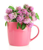 Clover flowers in cup isolated on white — Stock Photo