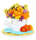 Bouquet of marigold flowers in watering can isolated on white — Stock Photo