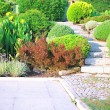 Landscaping in the garden — Foto de Stock