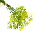 Fresh dill flowers, isolated on white — Stock Photo