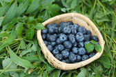 Blueberries in wooden basket on grass — Stock Photo
