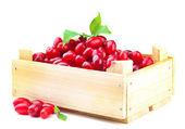 свежий кизил ягоды в деревянный ящик, изолированные на белом — Стоковое фото