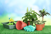 Beautiful flowers in pots on grass on bright background — Stock Photo