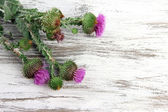 Thistle flowers on wooden background — Stock Photo