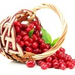 Fresh cornel berries in wicker basket, isolated on white — Stock Photo