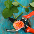 Garden secateurs and rose on wooden table close-up — Stok fotoğraf