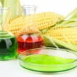 Stock Photo: Conceptual photo of bio fuel from corn. Isolated on white