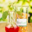 Conceptual photo of bio fuel. On bright background — Stock Photo #29860093